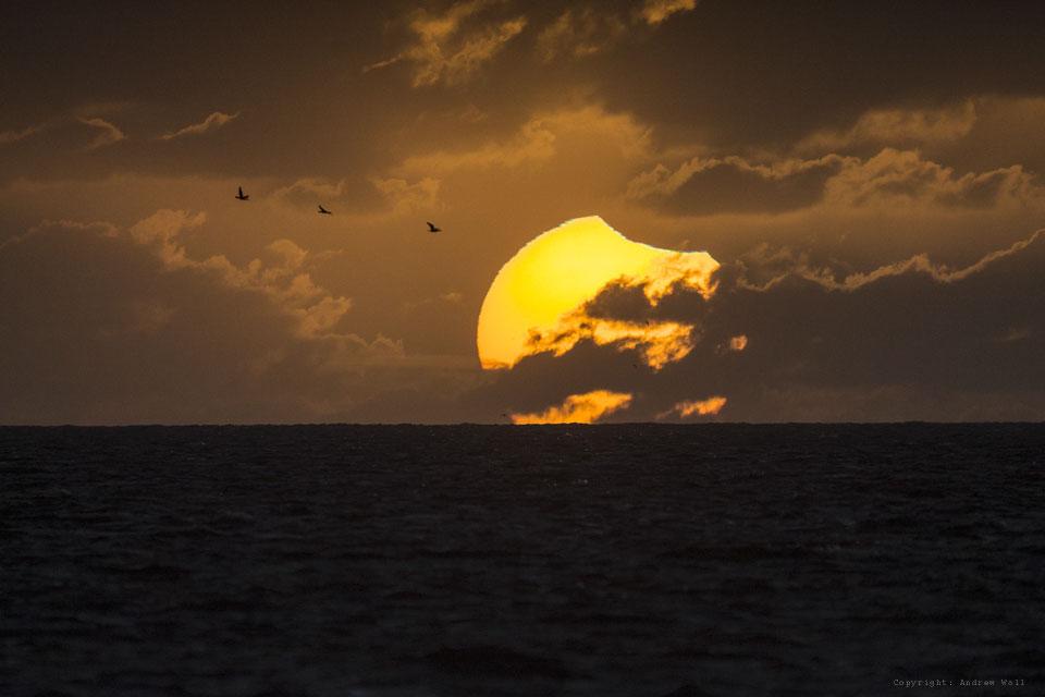 eclipsedsunbirds_wall_960