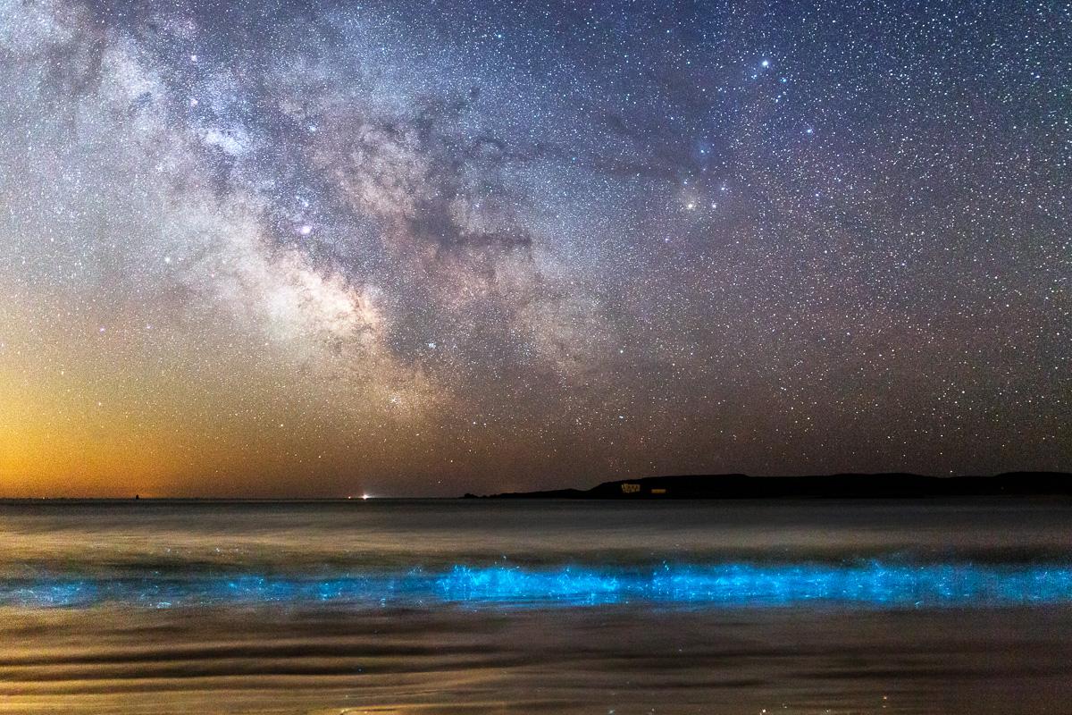 Plancton phosphorescent